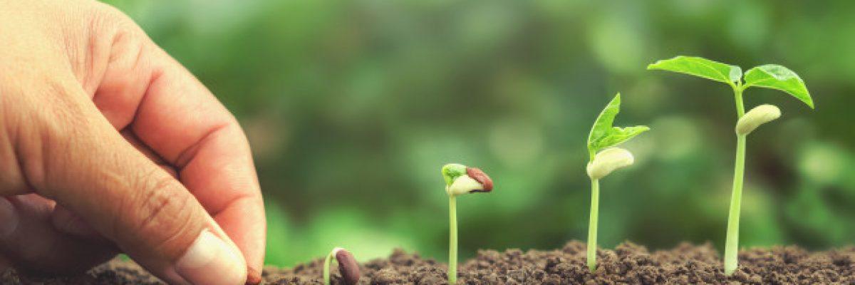 mano-sembrando-semillas-suelo-planta-creciente-concepto-paso_34152-110
